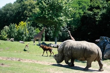 installations-zooparc-de-beauval-05