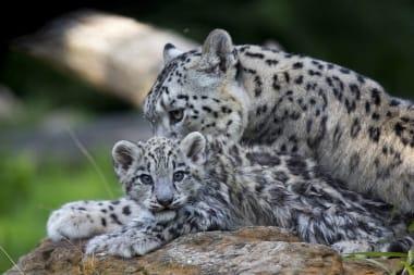 bebes-zooparc-de-beauval-23