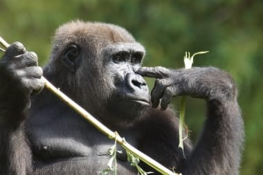 primates-zooparc-de-beauval-02